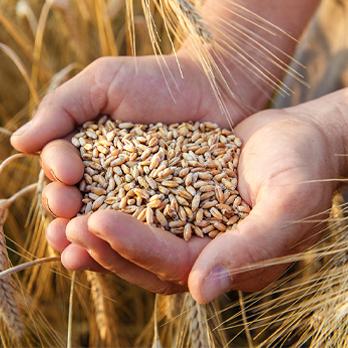 Broadacre-Grain-Crops-Water-Dynamics