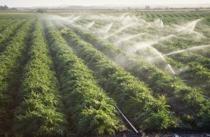 Irrigating Crops California, USA