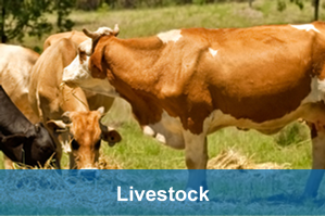 livestock industry water dynamics