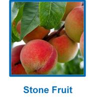 stone-fruit